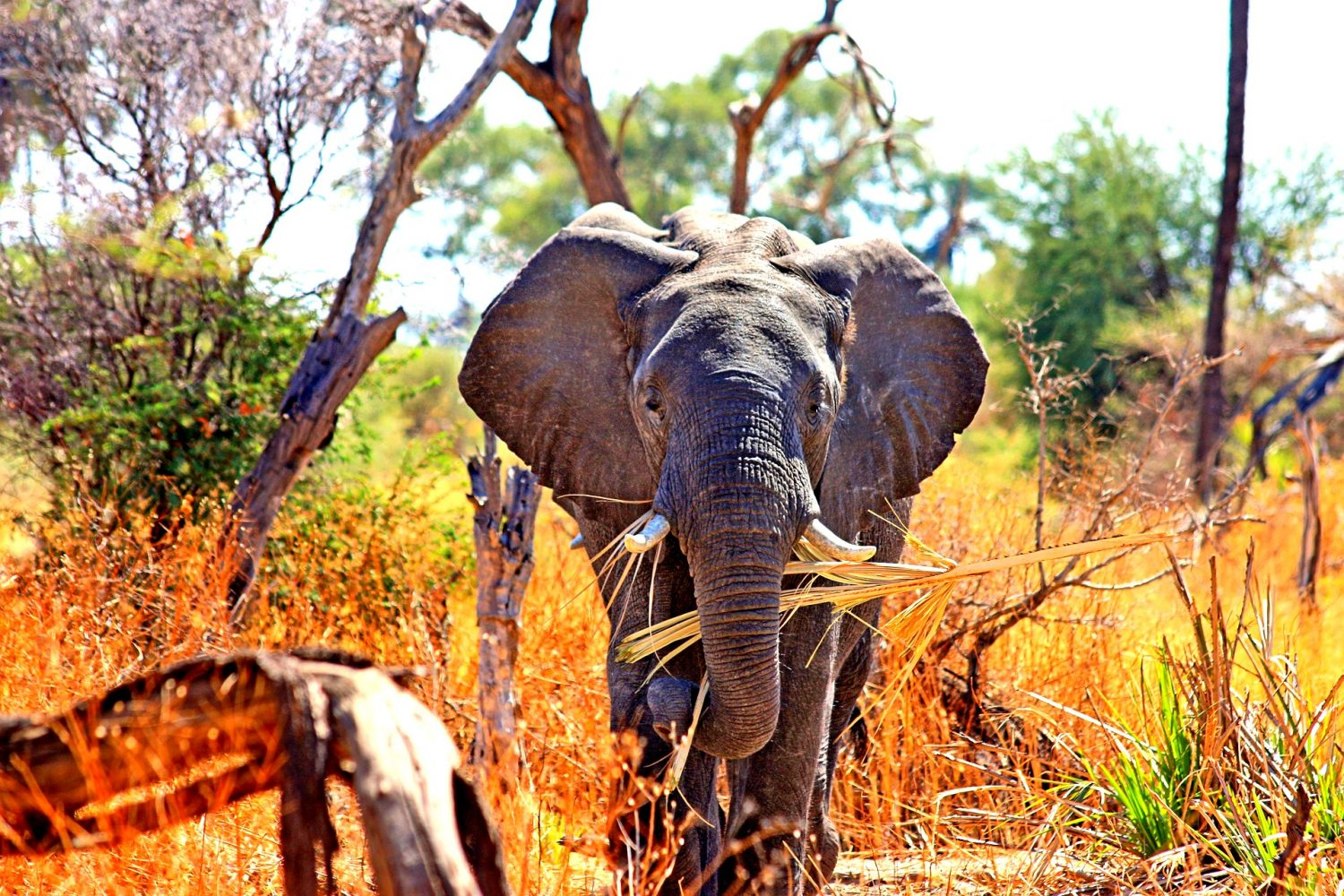 South Africa Tour Packages, Book South Africa Packages